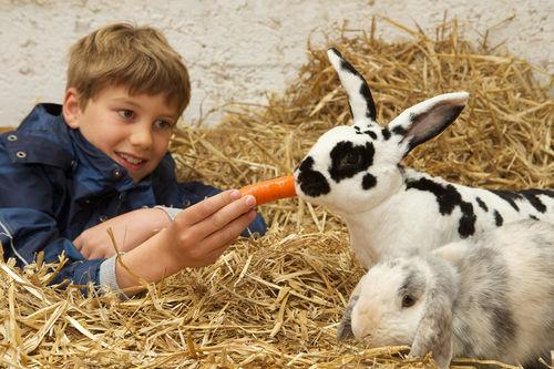 Welches Haustier Für Kinder